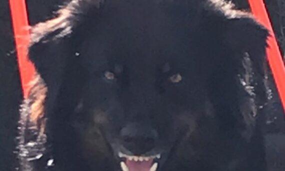 Aggression Hund