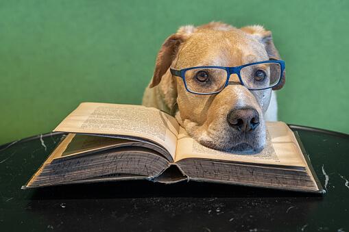 Hundehalter schulen