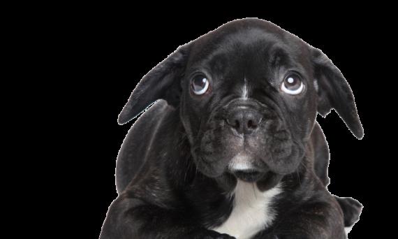angstverhalten biem hund