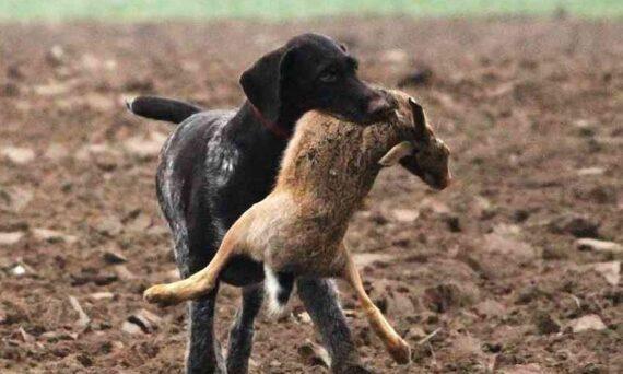 jagdverhalten hund