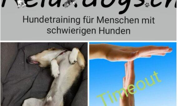 Ruhe beim Hund